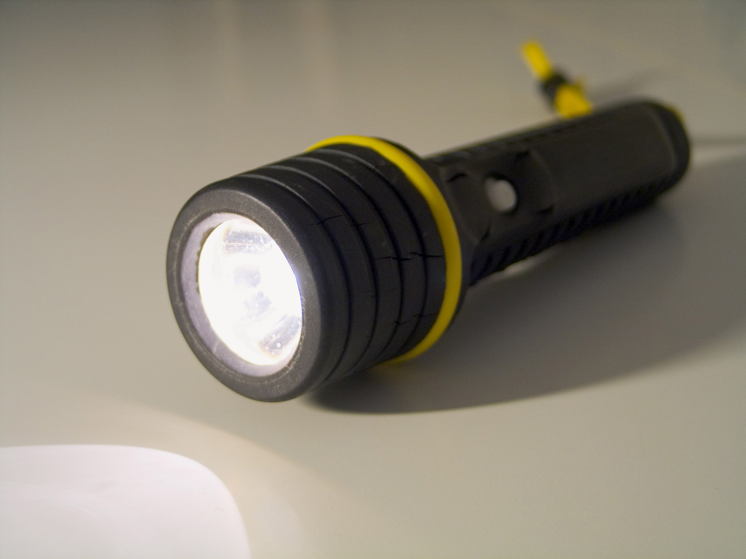 Border Collie Flashlight Obsession
