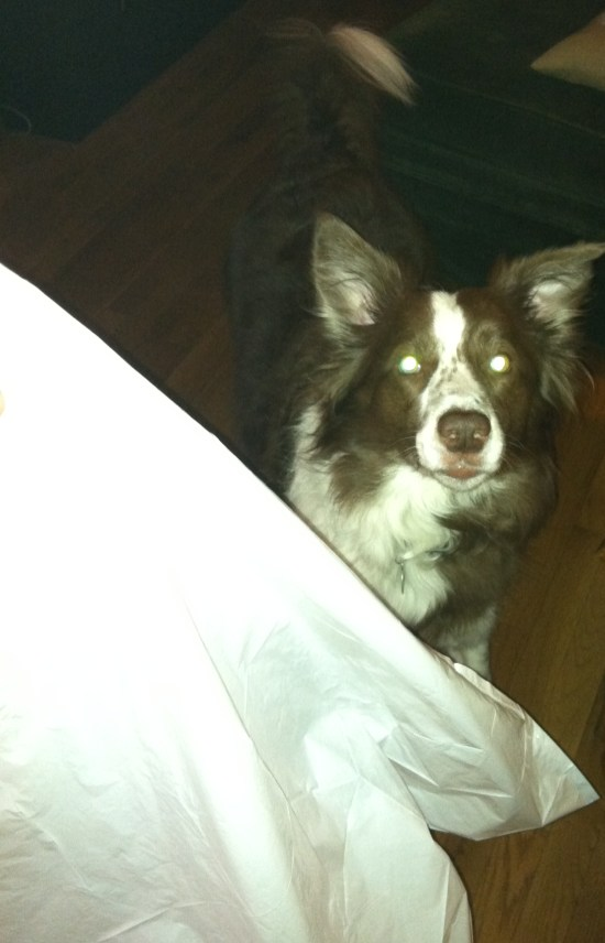 border collie trash bag