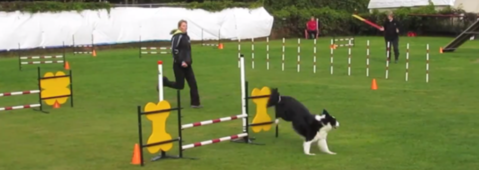 Border Collie Agility – RU Ready Agility Trial