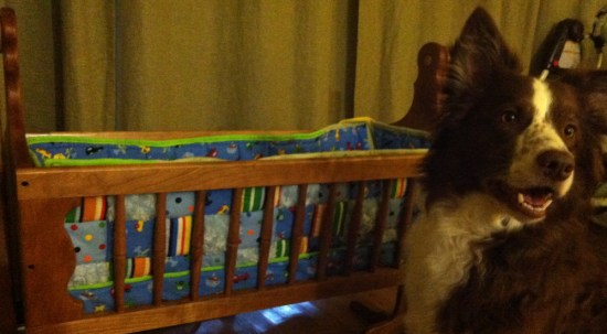 Ned the Border Collie and Baby Cradle